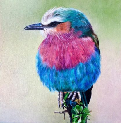 little bird 4site