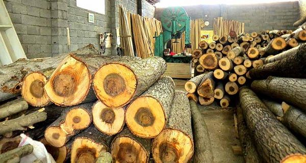 the best wood for wood working art